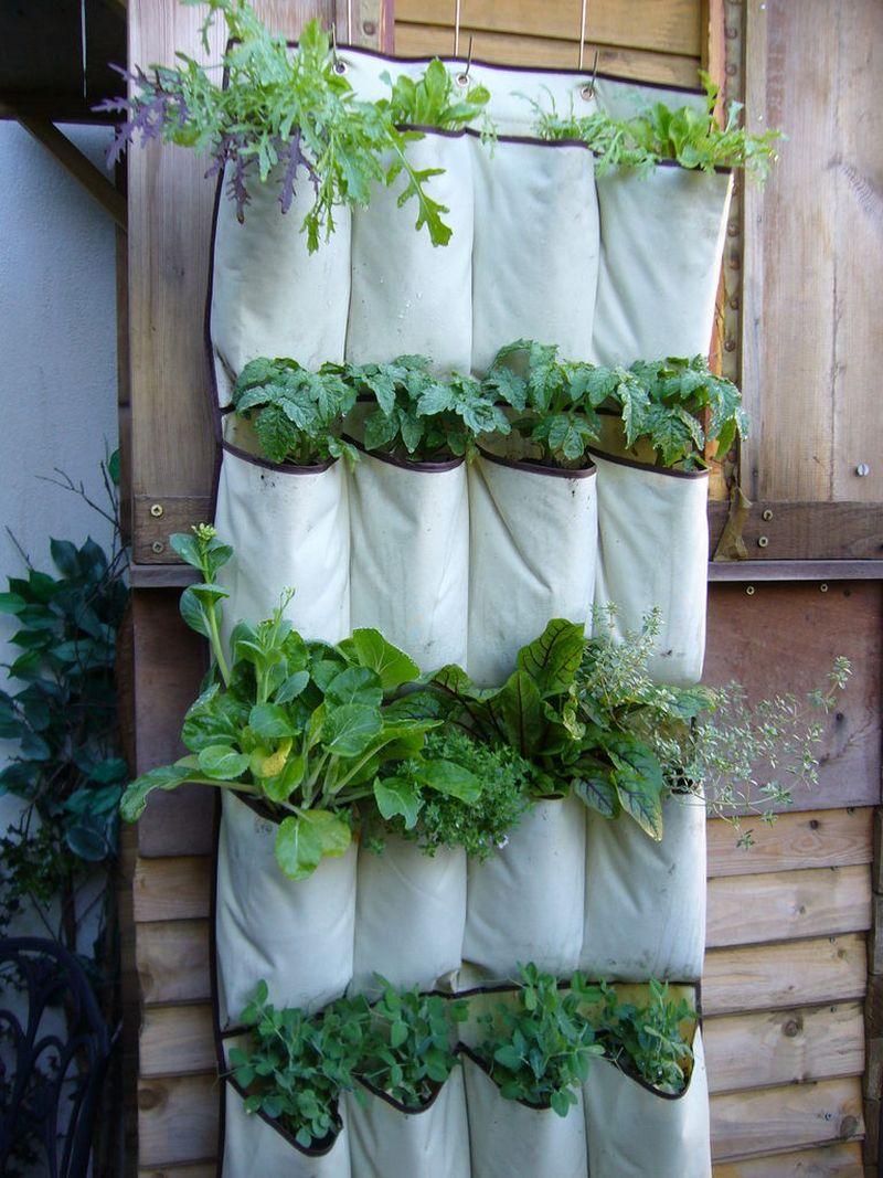 Hanging Shoe Storage Vertical Planter