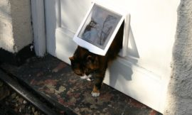 """In You Come"" — How to Install a Cat Flap"