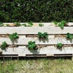 DIY Strawberry Pallet Planter