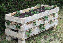 Pallet Strawberry Planter
