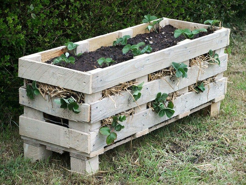 Turn a Pallet into a Strawberry Planter