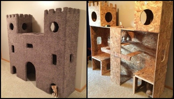 A cat castle will keep any cat busy!