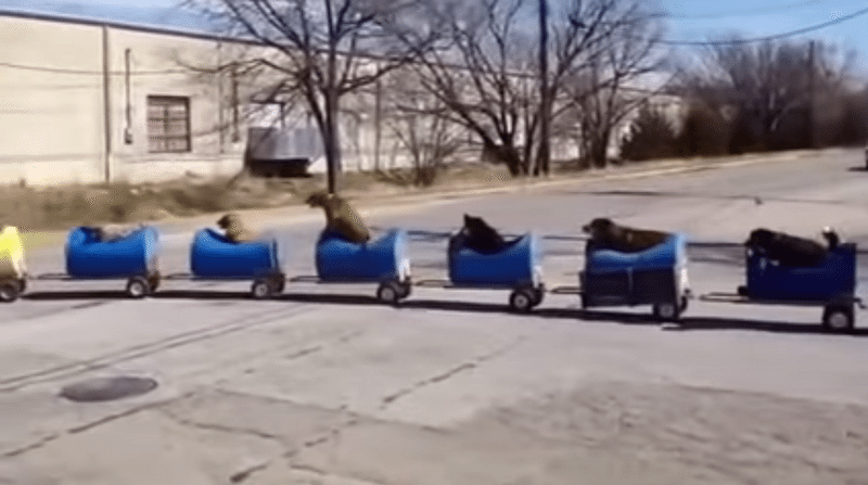 This homemade 'Dog Train' takes rescued puppies on outdoor adventures!