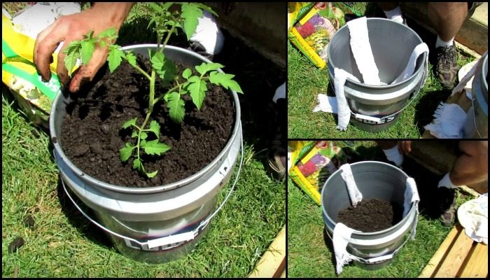 Gallon Tomato Container Garden Main Image