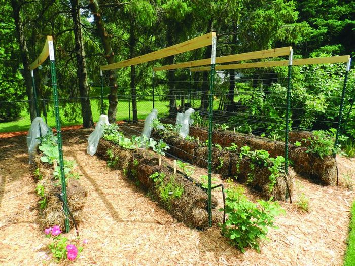How To Grow A Straw Bale Garden Diy Projects For Everyone
