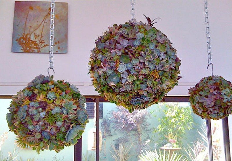 Decorate your garden by making these succulent balls diy projects for everyone - Fabulous flower stand ideas to display your plants look more beautiful ...