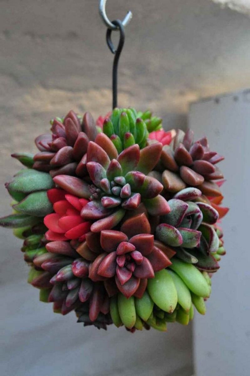 Decorate Your Garden By Making These Succulent Balls Diy