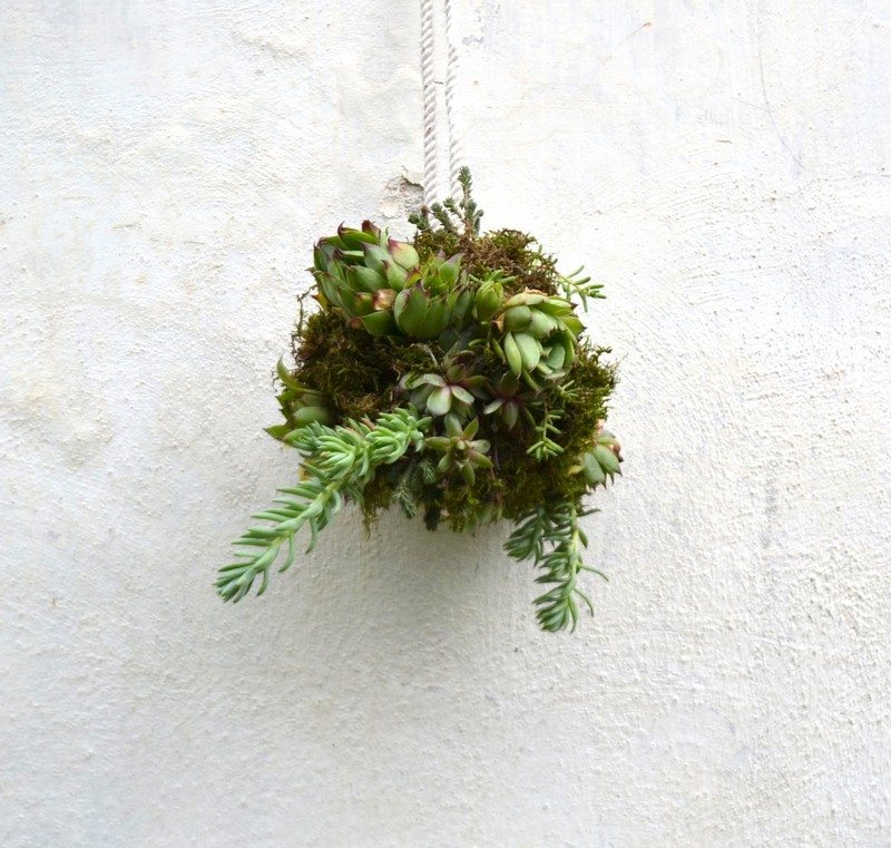 instructions to make a succulent ball