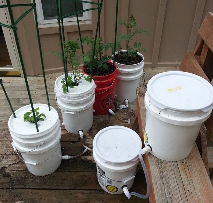 5 Gallon Self Watering Tomato Container Diy Projects For