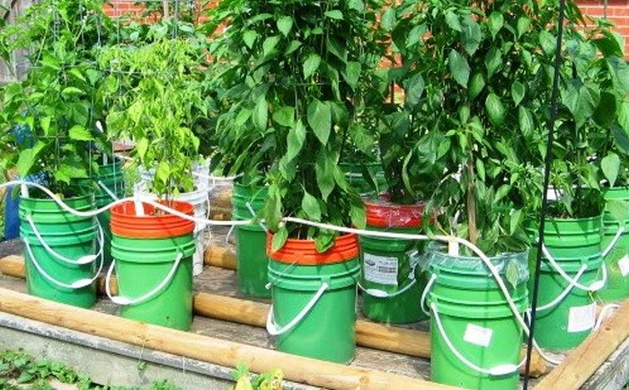 5 gallon self watering tomato container diy projects for everyone - Gallon bucket garden container ...