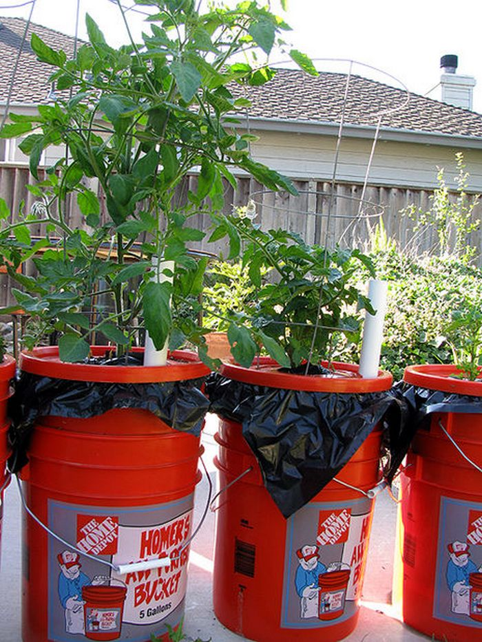 5 Gallon Self-Watering Tomato Container   DIY projects for