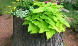 How to Make Your Own Tree Stump Planter
