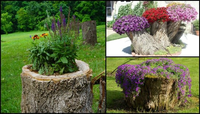How to make your own tree stump planter diy projects for for Hollow tree trunk ideas