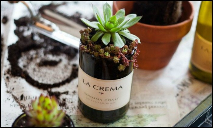 Turn wine bottles into gorgeous succulent planters!