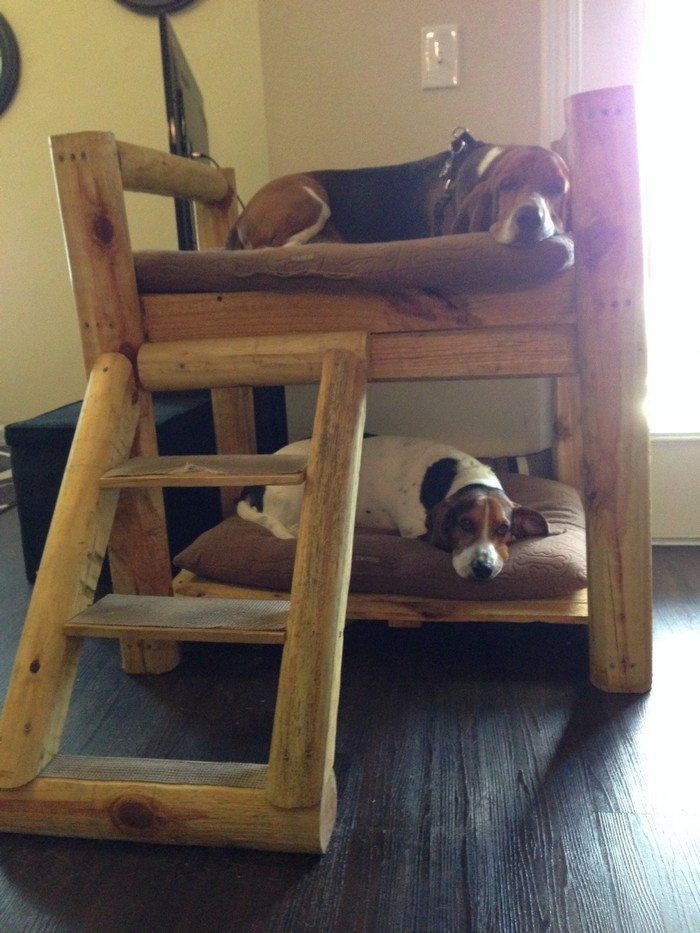 How to build a bunk bed for your pets diy projects for for Pet bunk bed gallery