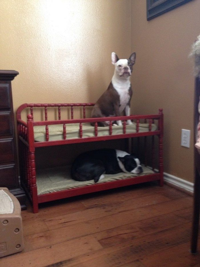 Replacing kitchen cabinet doors yourself - How To Build A Bunk Bed For Your Pets Diy Projects For