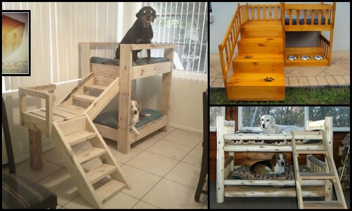 how to build a bunk bed for your pets diy projects for everyone. Black Bedroom Furniture Sets. Home Design Ideas