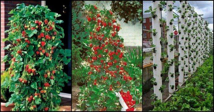 How to Vertical Garden