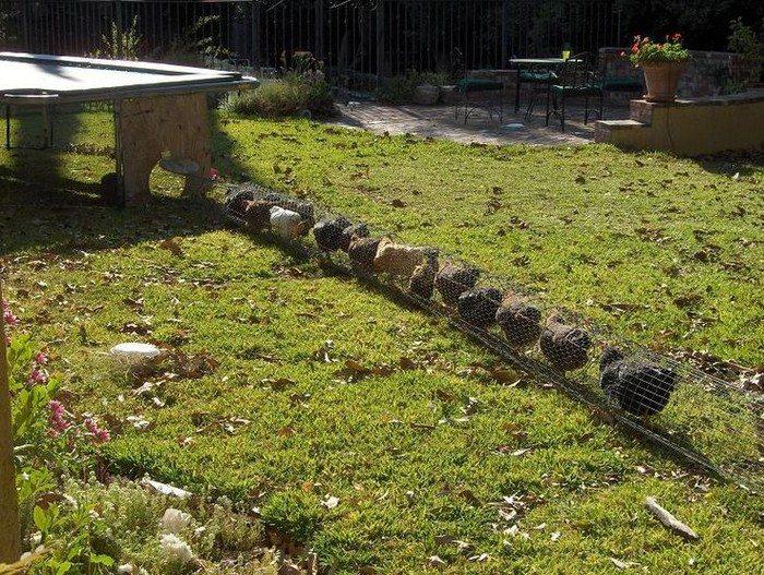 DIY chicken tunnel system makes chickens do the gardening