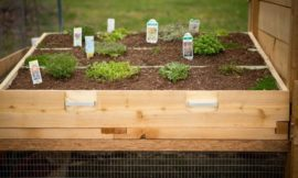 How to build a chicken coop with a green roof
