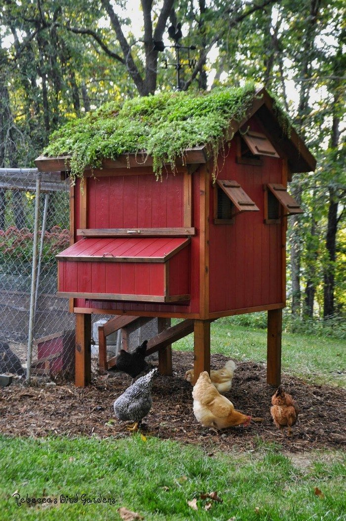 How to build a chicken coop with a green roof diy for Making a chicken coop