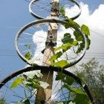 Garden Trellis From Old Bike Tires