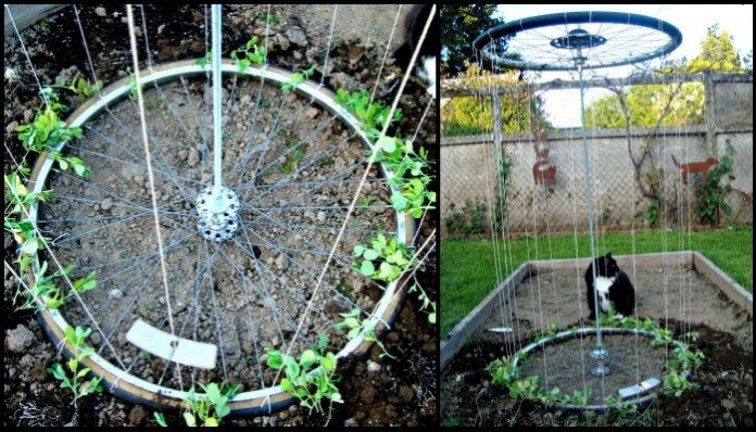 Garden Trellis From Old Bike Tires Diy Projects For