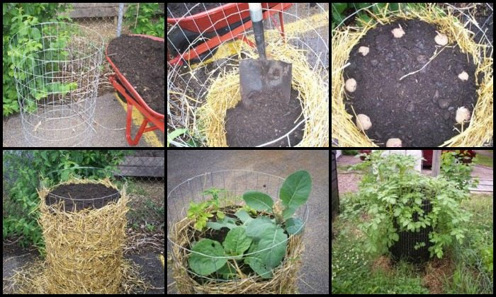 Wire Fencing Potato Tower Main Image
