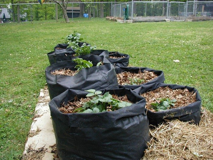 Make your own potato grow bags