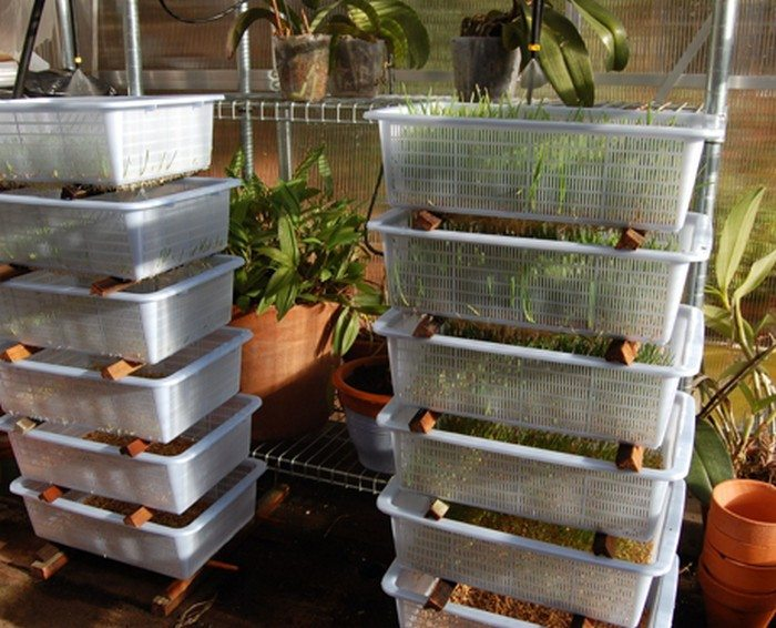 How to make an inexpensive livestock fodder growing system : DIY projects for everyone!