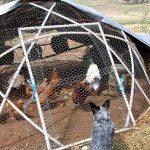 Geodesic Chicken Coop