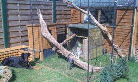 How to build an outdoor cat run