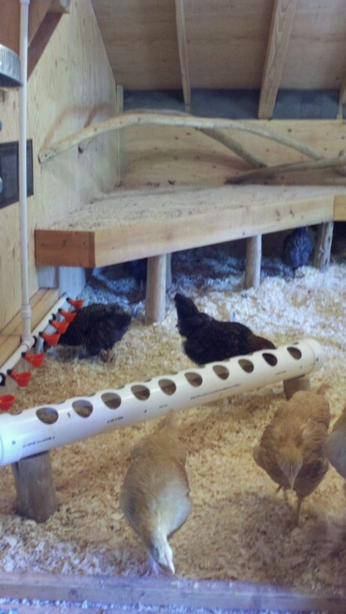 How To Build A Chicken Roost Diy Projects For Everyone