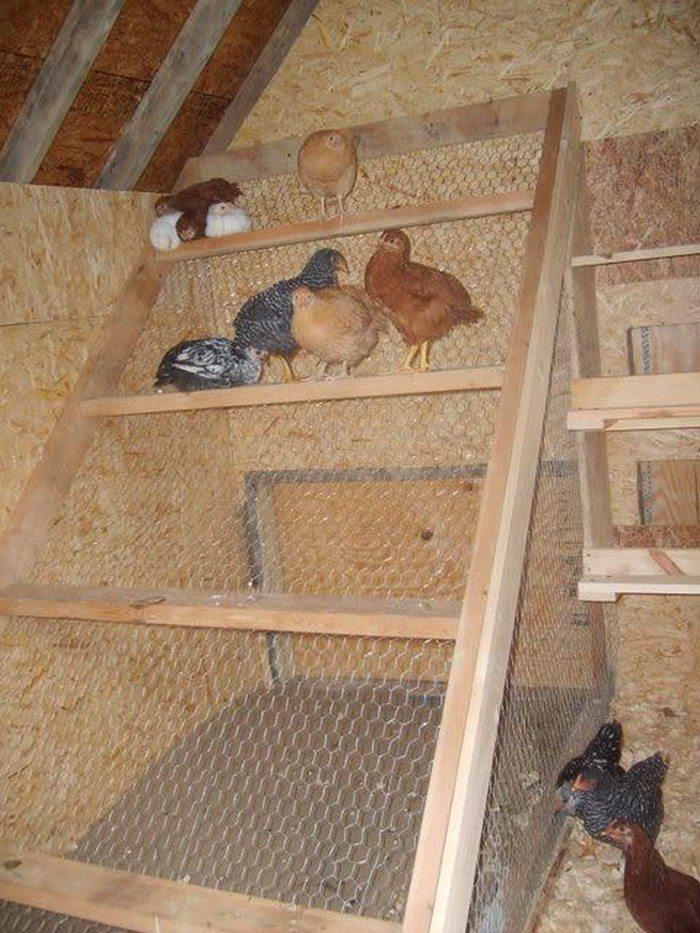 Chicken coop roosts - photo#6