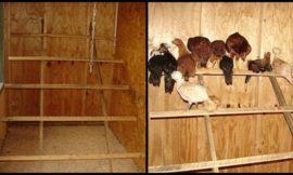 How to build a chicken roost