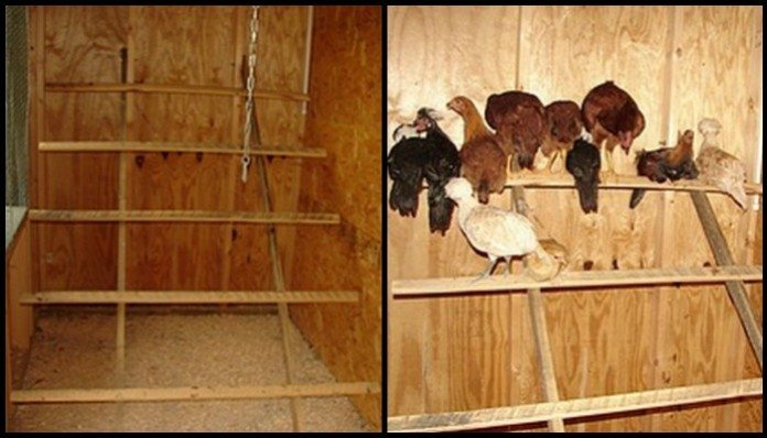 Chicken Roost Main Image