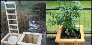 Garden Grow Box Trellis Combo Main Image