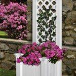 Garden Grow Box and Trellis Combo