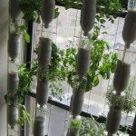 Recycled Soda Bottles Vertical Garden