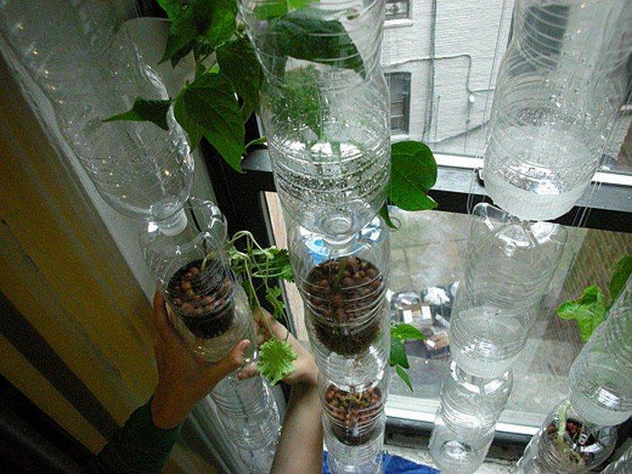 pop bottle terrarium bean plant experiment For student use a 2-liter soda bottle for each student group scissors 6 bean seeds per bottle 2 pinches of grass seeds per bottle 2 pinches of clover seeds per bottle.