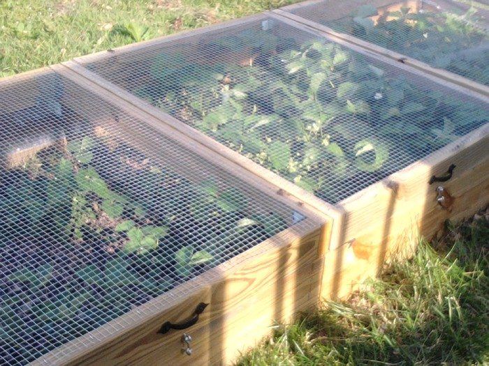 How to build a strawberry cage