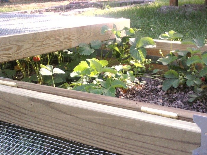 Grow And Protect Your Produce With A Removable Raised