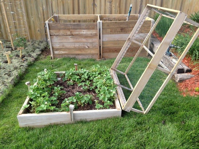 How to build a strawberry cage DIY projects for everyone