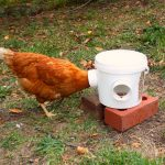 Mess-Free Chicken Feeder Finished Product