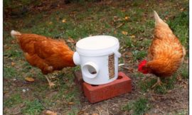 How to build a mess-free chicken feeder