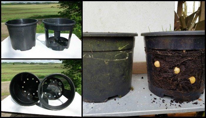 No-Dig Potato Buckets Main Image