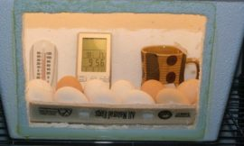 Build an inexpensive egg incubator