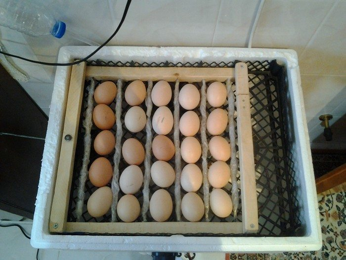 Build An Inexpensive Egg Incubator Diy Projects For