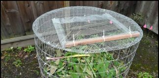 DIY Wire Mesh Compost Bin