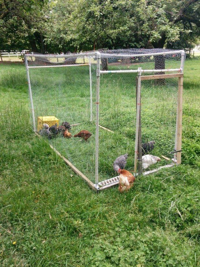 PVC Chicken Tractor